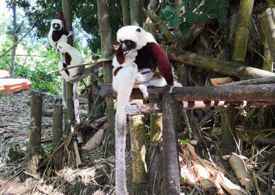 SAFARI 4x4 Madagaskar - Nosy Be